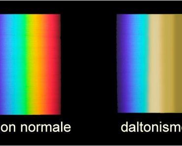 Vision des daltoniens