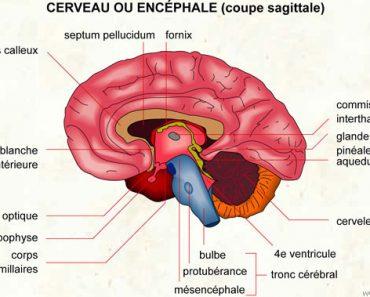Encéphale
