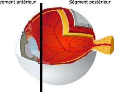 Le segment antérieur du globe oculaire