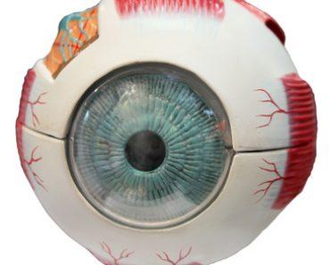 La rétine de l'œil