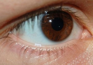 Iris brun