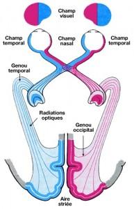 Les lésions du nerf optique