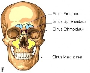 Sinus sphenoïdal