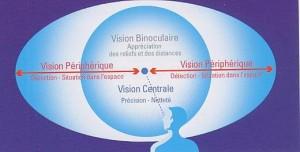 La vision centrale
