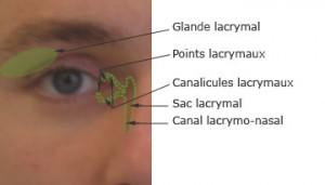 Le canal lacrymo-nasal