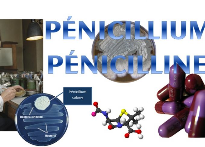 La pénicilline