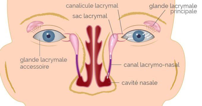 Les voies lacrymales