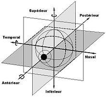 Mouvement de rotation des yeux