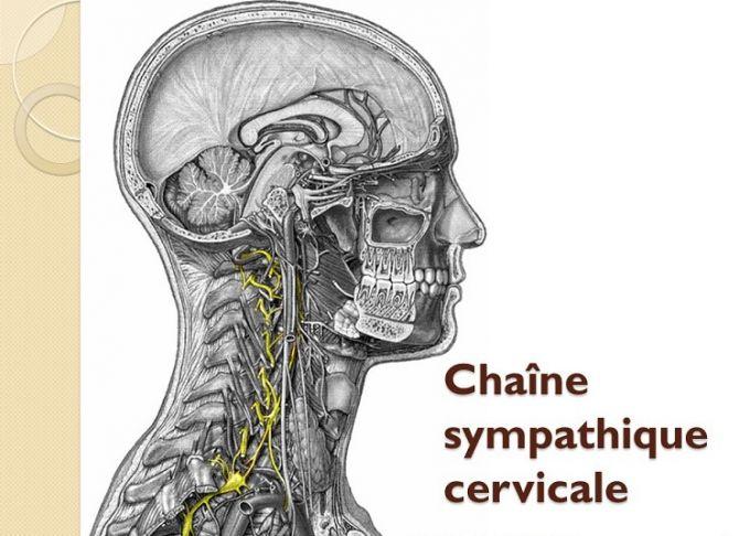 La chaine sympathique cervicale