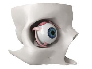 Mouvement de l'œil