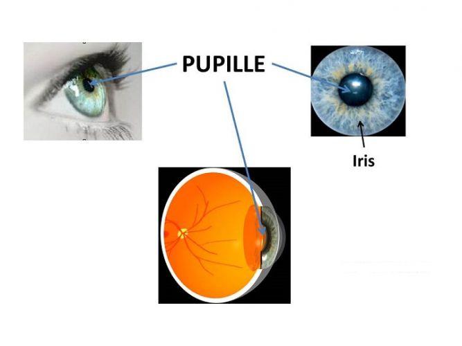 La pupille