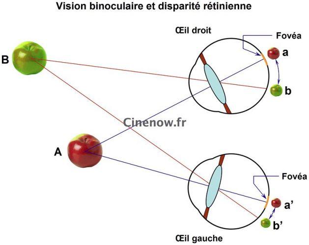 La vision binoculaire