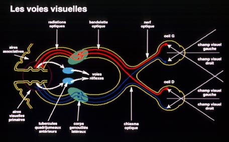 La voie conduction optique