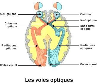 Voie optique